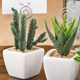Potted succulent favor / placecard holder / photo holder